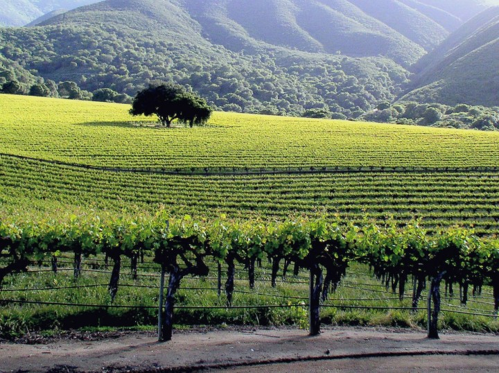 Hahn Family Wines (vineyard pictured) replaced most of its Cabernet plantings with Pinot Noir and other varietals better suited to Monterey's climate.