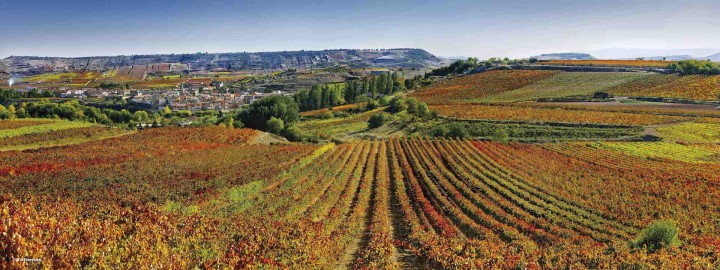 The Spanish wine category, including labels like the top-selling Marqués de Cáceres (vineyards pictured), is on the upswing in the United States.
