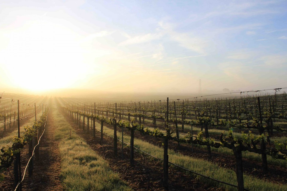 Delicato Family Vineyards (Clay Station vineyard pictured) offers seven red wine blends in a range of flavor profiles to suit a variety of consumer tastes.