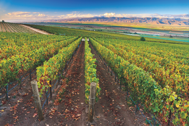 Santa Lucia Highlands is diversifying beyond Pinot Noir and Chardonnay. Morgan Winery's Double L vineyard (pictured) includes Riesling and Syrah.