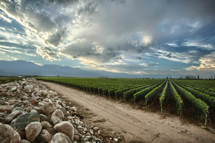 Acclaimed for its Malbec, Argentina also offers Cabernet Sauvignon, Chardonnay and Torrontés (Zuccardi's vineyards pictured).