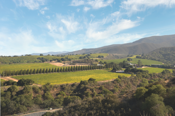 Pinot Noir thrives in coastal California, from the Santa Lucia Highlands to Sonoma (Hahn Family Wines vineyard pictured).