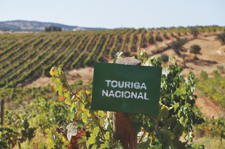 One of Barcelona Wine Bar's top wines is a Touriga-Nacional—based blend sourced from the Dão region (above).