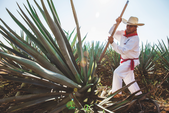 Interest in high-end Tequilas (Casa Herradura jimador pictured) has soared in recent years.