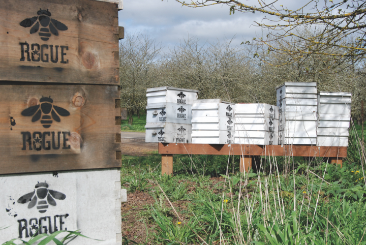 In addition to growing its own barley, hops, pumpkins and jalapeños for use in its beers, Rogue also raises honeybees to collect honey for brands like Honey Kölsch (Rogue apiary pictured).
