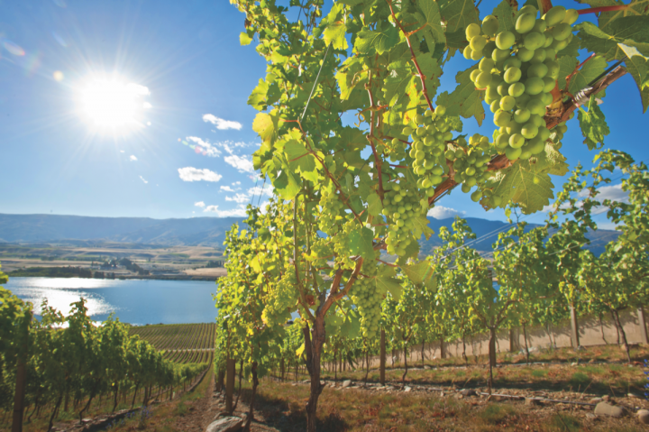 New Zealand vintners are starting to release unique wines from regions other than Marlborough (Misha Vineyards in Central Otago pictured).