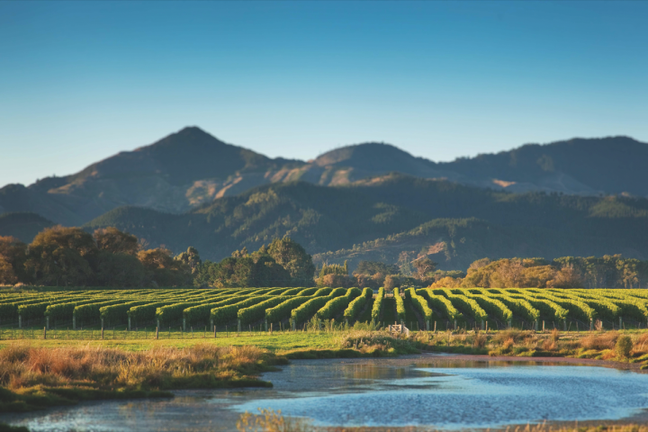 Kim Crawford (Marlborough vineyard pictured) leads the New Zealand category in the United States with over one million cases.