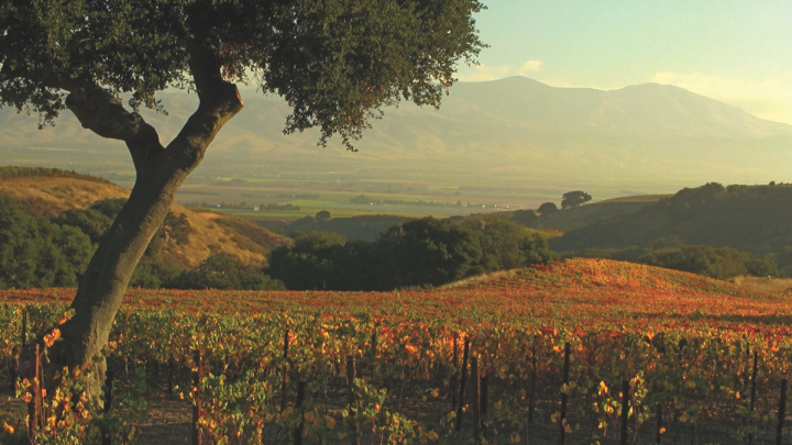 Since selling Meiomi (Moneterey vineyards pictured) to Constellation, Wagner has filled the void with a host of new brands.