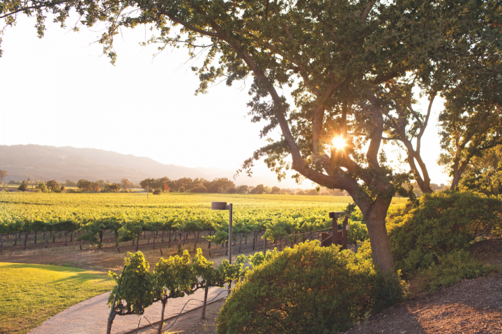 American consumers are turning to accessibly priced domestic sparklers like California-based Mumm Napa (vineyard pictured) for everyday sipping outside of celebratory occasions.