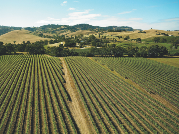 The Barossa Valley's Peter Lehmann Wines (vineyards at Lyndoch, Barossa pictured) works with 130 growers across the region, which comprises a variety of terror, topography, and microclimates.