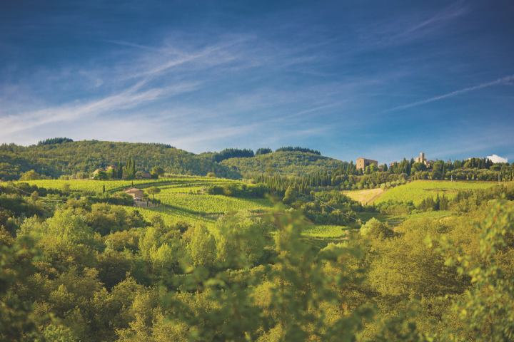 Castello di Volpaia owns 43 acres of vineyards (pictured) in the heart of Italy's Chianti Classico DOCG. The winery first started producing wine in 1172, and was a founding member of the Chianti League. Today, the Mascheroni Stianti family owns the winery and two-thirds of the village.