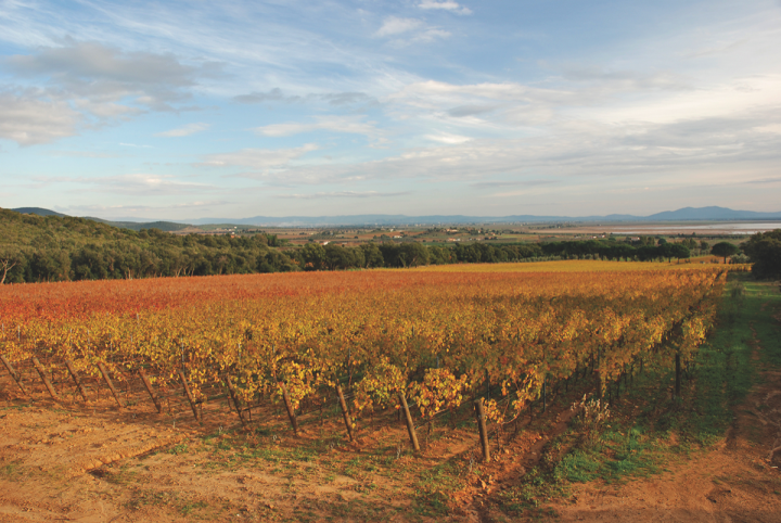 Volpaia's Prelius label (vineyards pictured) includes certified organic wines that are aimed at restaurant and wine bar accounts.