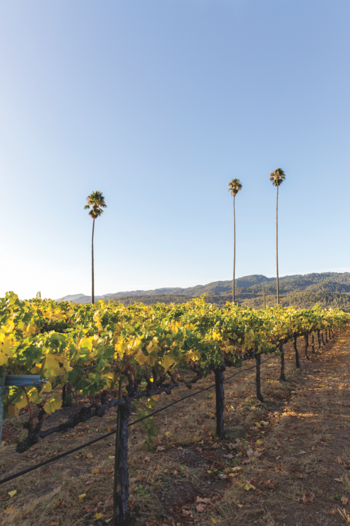 Napa Valley's Duckhorn Wine Co. (Three Palms Vineyard pictured) offers a variety of high-end red blends, meeting an increased demand for luxury offerings within the category.