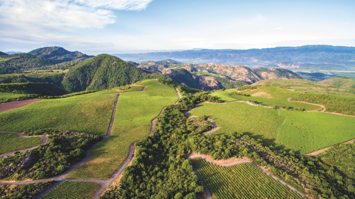 E. & J. Gallo purchased Napa's Stagecoach Vineyard for $180 million in April 2017. The vineyard will supply Orin Swift, among other brands.