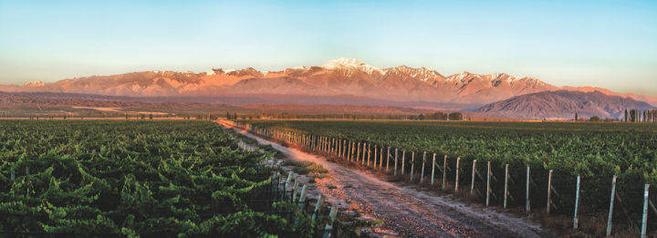 Argentina has long been known for its Malbec, but the country's winemakers are trying to expand the reach of other varietals (Bodegas Norton vineyard pictured).
