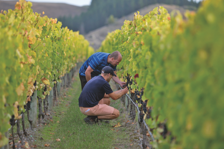 While New Zealand brands like Craggy Range (Hawke's Bay vineyard pictured) have enjoyed booming popularity in the U.S market thanks to Sauvignon Blanc, they're now looking at new varietals like Pinot Noir.