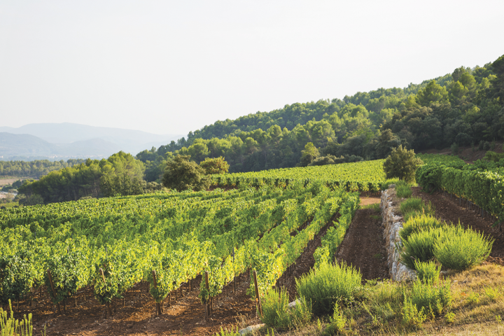 Provencal rosés have given the category mass-market appeal.