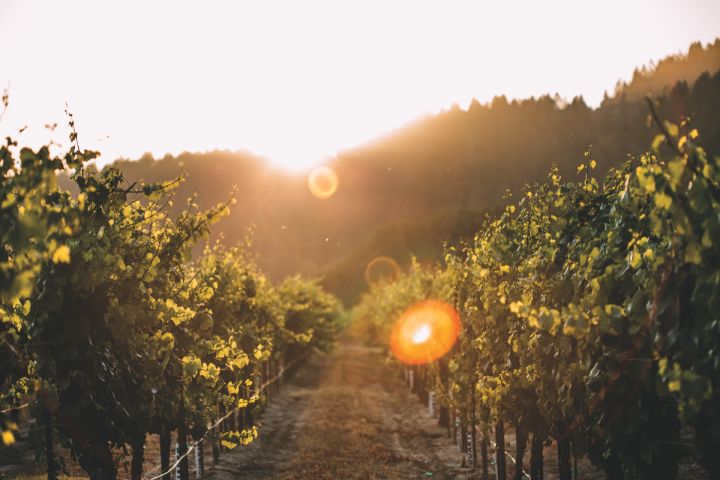 Trinchero Family Estates purchased California's Bravium Wines (Russian River Valley vineyards pictured) last year.