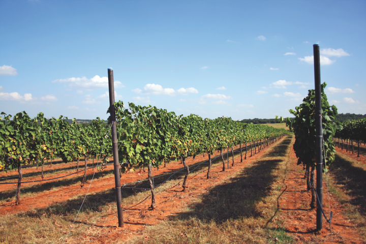 The Texas Hill Country AVA is the country's second largest. It has two sub-regions: Fredericksburg and Bell Mountain, the state's oldest AVA, where Kuhlken Vineyard (pictured) is located.