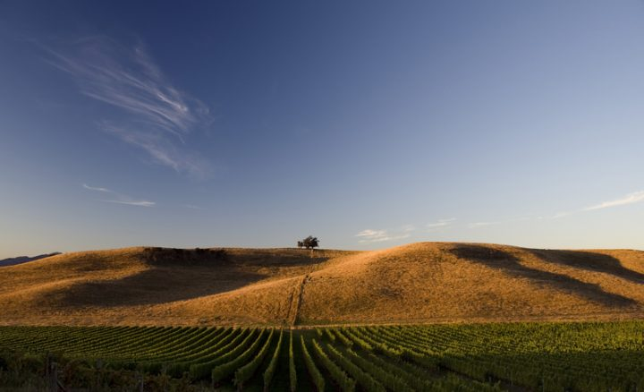 Greywacke Winery (vineyard pictured) is one of many New Zealand wineries seeing success thanks to premiumization.