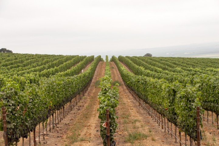 Monterey newcomers like Caraccioli Cellars (vineyard pictured), a sparkling wine producer, have reinvigorated the area's reputation.