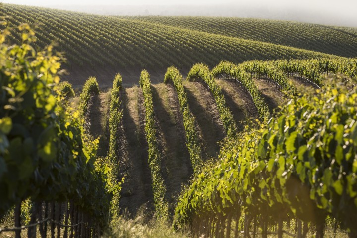 Wente Vineyards uses estate-grown grapes from Livermore Valley and Arroyo Seco for its flagship 500,000-case brand, which is expected to grow up to 12 percent in 2015.