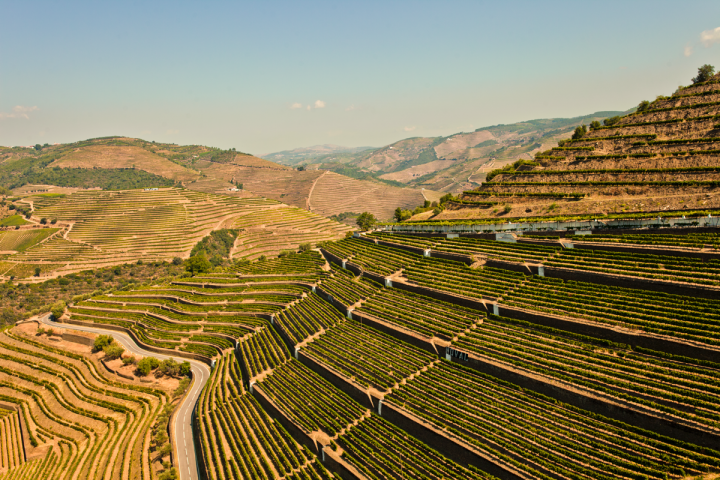 Portugal has a long table wine history with over 250 native grape varietals and 14 wine regions (Quinta do Noval vineyards in the Douro pictured).