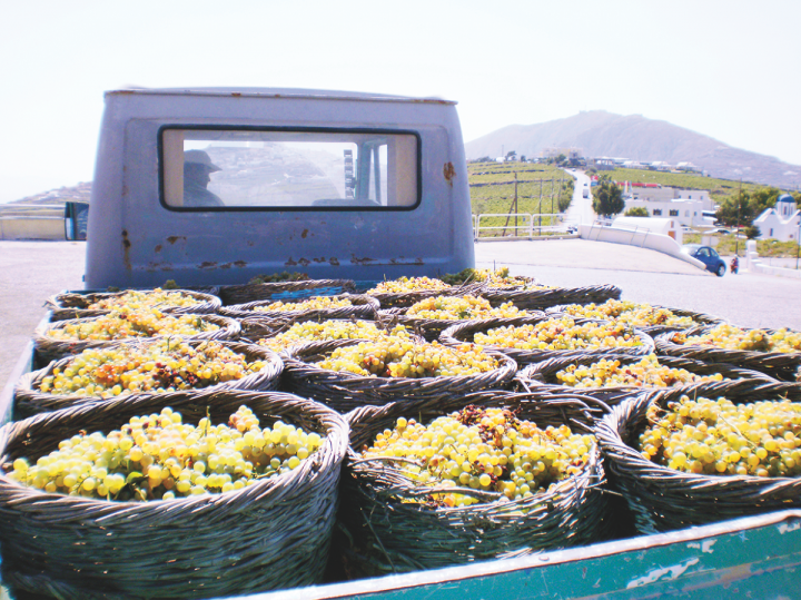 Thanks to improved winemaking techniques and a new focus on the country's indigenous grapes, the wines of Greece—particularly Assyrtiko (pictured)—have won fame with sommeliers.