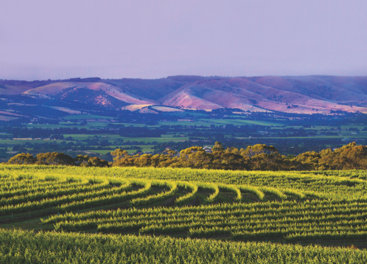 Interest in Australian wine regions like McLaren Vale (pictured) and Barossa Valley remains strong, though sommeliers and consumers are moving away from the country's signature grape, Shiraz.