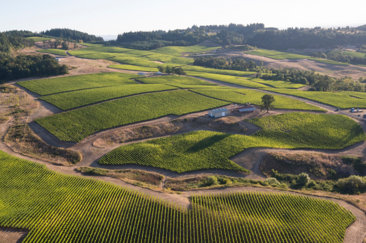 Oregon's patchwork of small vineyard parcels makes winemaking in the state more expensive (Erath Willakia Vineyard pictured).