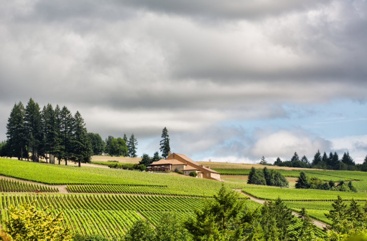Burgundy's Domaine Drouhin (Oregon estate pictured) was the first outside player to enter Oregon in the late 1980s.