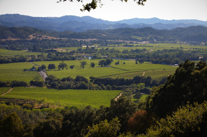 Rodney Strong Vineyards owns 14 estate vineyards in Sonoma County, including the Rockaway vineyard (pictured) in Alexander Valley.