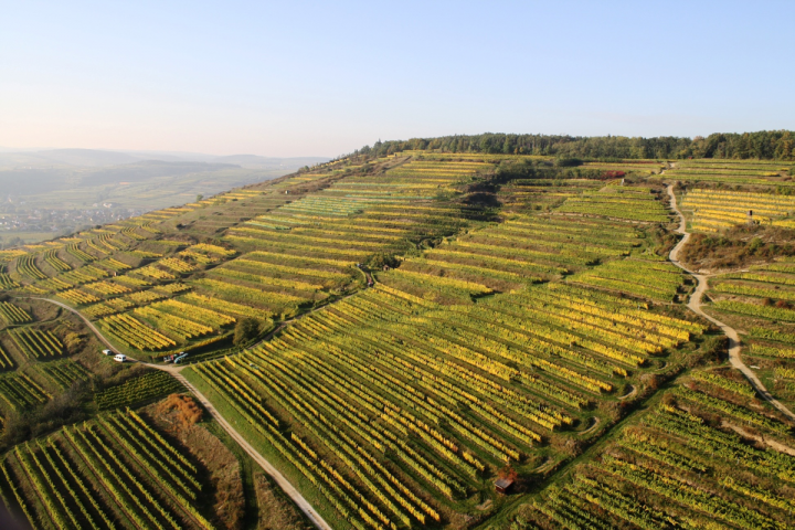 Austria has developed a reputation as a producer of high-end dry white wines with a strong value proposition, but the country's offerings are truly diverse. Weingut Bründlmayer in the Kamptal region (vineyards pictured) produces white, rosé, red, sparkling and dessert wines.