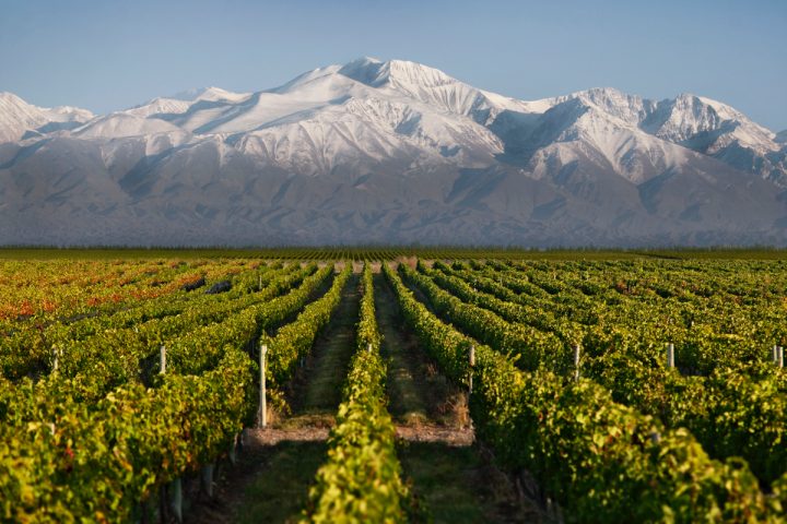 Regional terroir (Bodega Cuarto Dominio vineyards in Uco Valley pictured) drives Argentine wine.