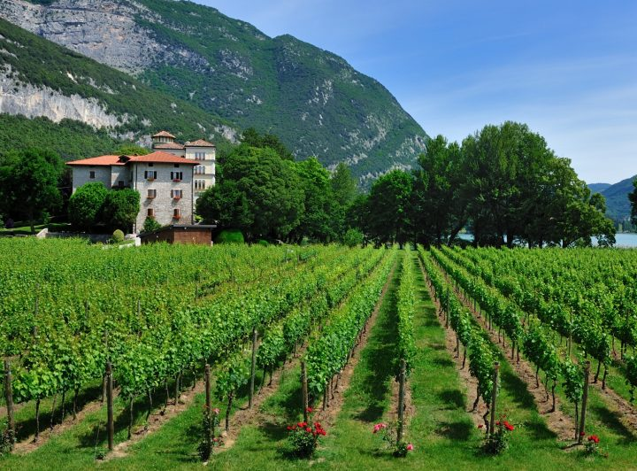 Palm Bay imports 10 wine brands produced by Italy's Cavit (winery pictured).