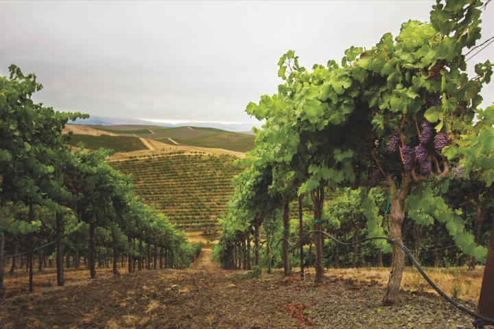 Meiomi, the largest California Pinot Noir by dollars sales, has helped introduce younger customers to super-premium Pinot Noir from the state. Luxury and collectible offerings, however, have yet to reach the pricing heights commanded by Napa Cabernet.