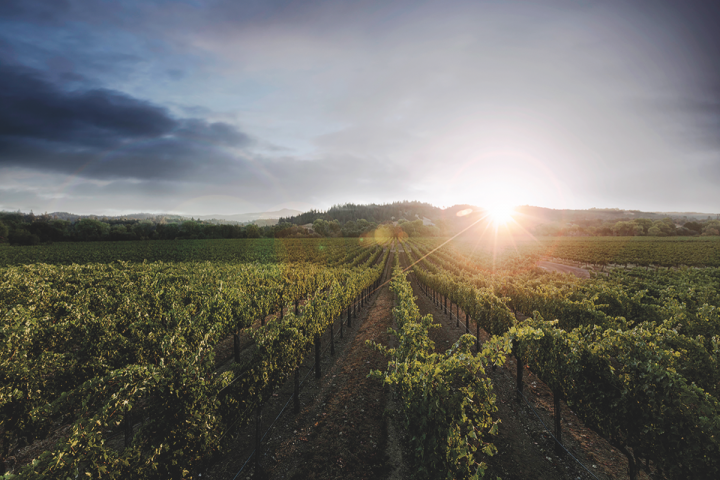 Sonoma Valley–based Kenwood Vineyards (Estate Vineyard pictured) is shifting focus to its smaller, premium lots like Six Ridges and its Single Vineyard range.