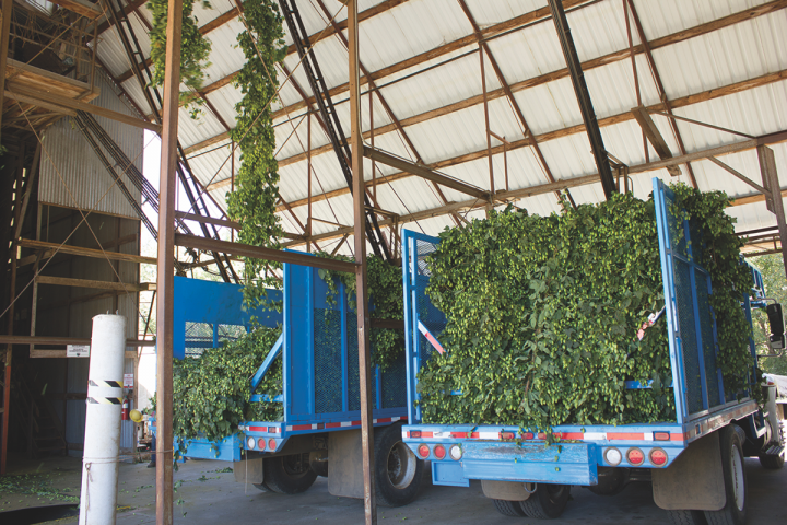 The brewery was one of the first to grow its own ingredients, and has received positive feedback regarding the DIY approach (hop trucks pictured).