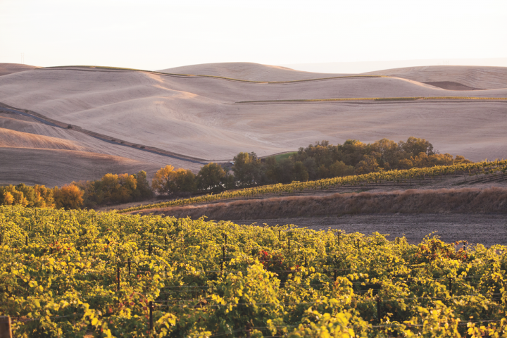 Washington vineyards like Waterbrook (pictured) are bringing national notoriety to the state's high-quality, low-priced Cabernet Sauvignon.