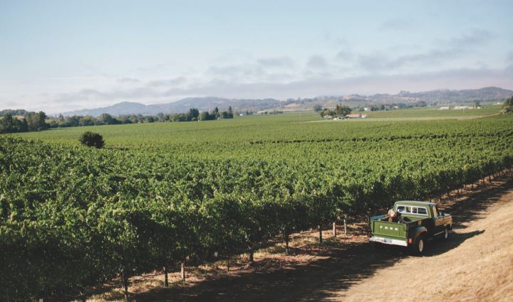 Though Chardonnay is king of California white wines, Sauvignon Blanc is increasingly popular throughout the state (Tom Gore vineyards pictured).
