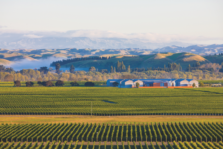 Craggy Range Winery (above) is currently building up its Pinot Noir presence in the U.S. market.