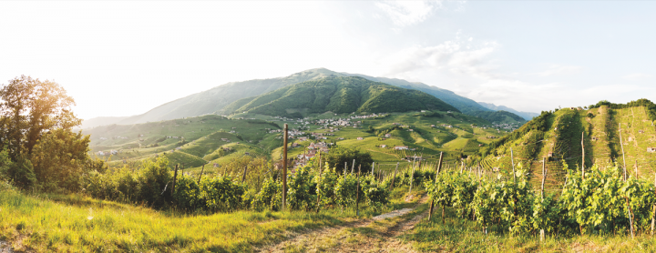 Wilson Daniels' high-end portfolio ranges across countries and styles and includes famous names like Bisol, which has made wine in the Prosecco region for five centuries.