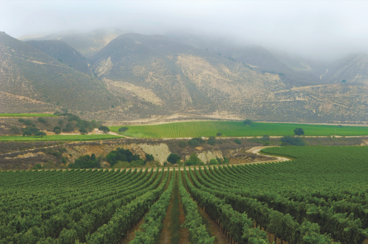 In the heart of the Arroyo Seco AVA, Scott Family Estate (vineyards pictured) makes ultra-premium Pinot Noir and Chardonnay. The two varietals grow exceptionally well in Monterey Country.