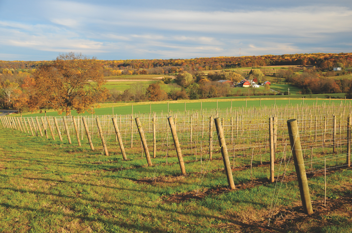 Though New Jersey wineries (Unionville Vineyards above) are increasingly offering higher quality wines, they face challenges like higher operating costs and the state's industrial reputation.