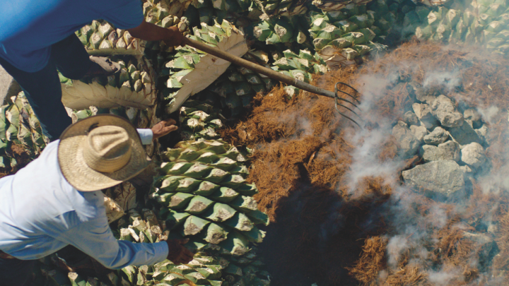 Gem & Bolt differentiates itself from other mezcal brands on the market through its use of the damiana plant during distillation (palenque pictured).