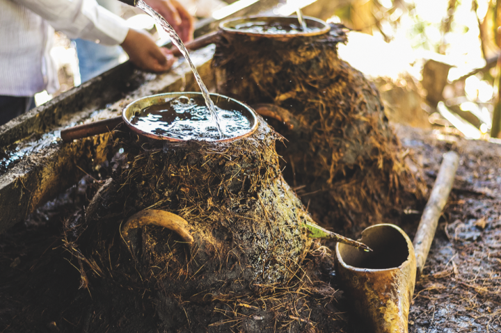 In addition to its replanting initiative, 3 Badge Beverage Corp. uses a diverse array of agave in its Bozal brand to negate potential supply challenges.