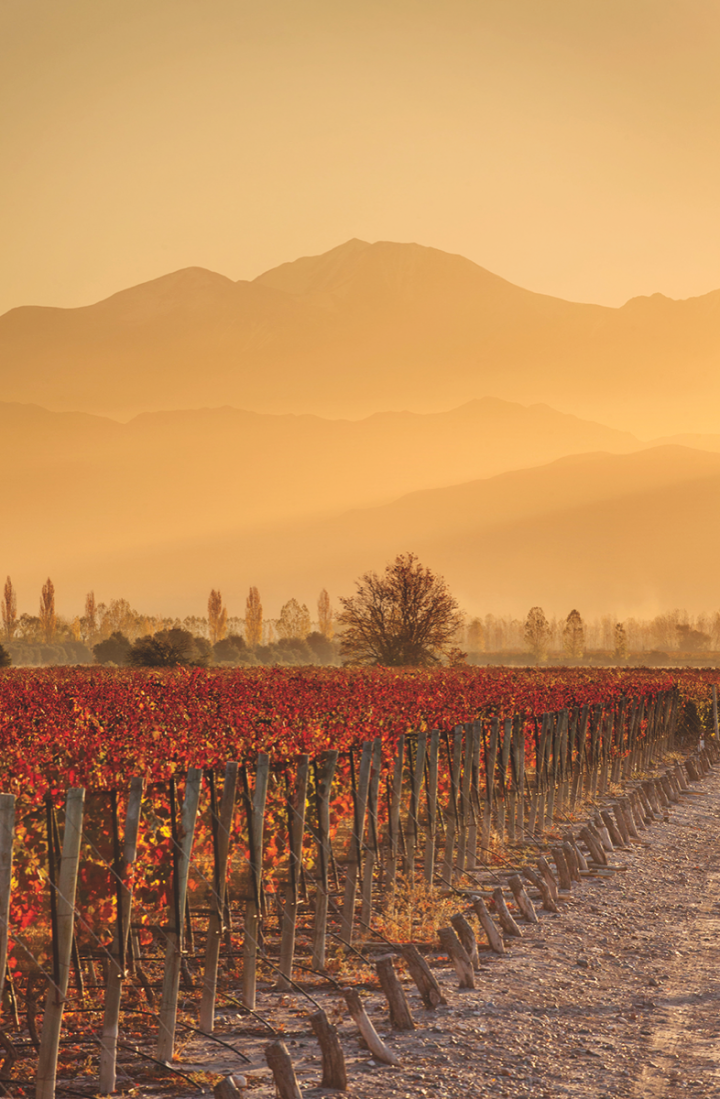 Winemaking in Argentina is driven by location. Brands like Kaiken Wines (fields pictured) are based in Mendoza, Argentina's flagship region and the heart of the country's Malbec production.