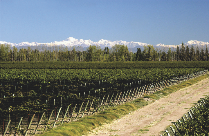 Imported wines to the U.S. exceeded 100 million cases in 2017 (Argentina's Valentin Bianchi Vineyards pictured).