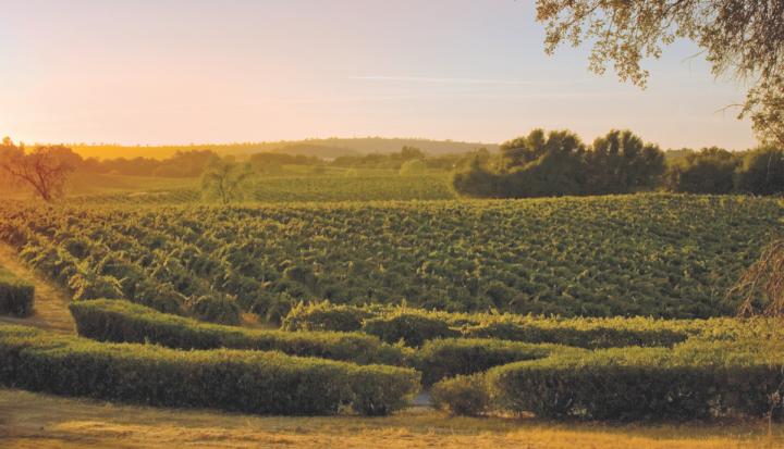 In recent years, Trinchero has premiumized its portfolio (California's Terra d'Oro vineyards right).