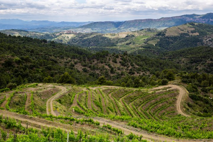 Spanish winemaking is in the midst of a revival, with wineries like Perinet (vineyards pictured) showcasing the strength of the country's terrain.